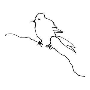 Bird1_FeaturedImage